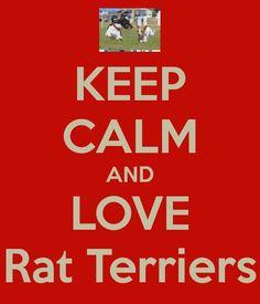 Love Rat Terriers