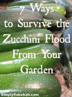 When your garden is overflowing with zucchini, here are 7 ways to use them up! Some of my favorite zucchini recipes from all time are in this post. (Whole Wheat Zuchinni Muffin) Whole Food Recipes, Healthy Recipes, Frugal Recipes, Fruits And Veggies, Vegetables, Zucchini Squash, Canning Recipes, Vegetable Dishes, So Little Time