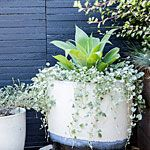 View All Photos | 30 ideas for succulents in containers | Sunset