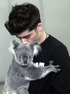 Zayn Malik of One Direction with a koala bear