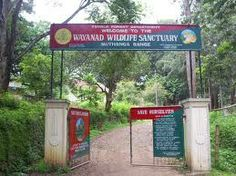 Wayanad Wildlife Sanctuary (Pakshi pathalam) Hevan of Birds