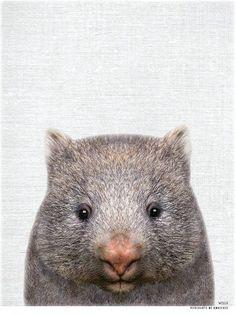 Aussie Animal Print - WILLS the Wombat - Australia Originals Funny Animal Clips, Animal Memes, Baby Animals, Funny Animals, Cute Animals, Wombat Pictures, Australia Animals, Australia Funny, Fauna