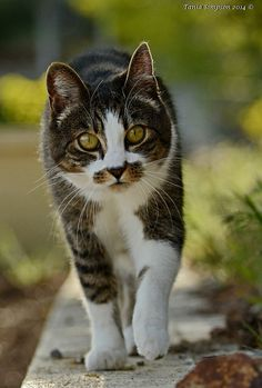 On the Prowl by Photography Through Tania's Eyes
