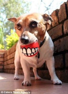 Funny chew toy. #dentistry