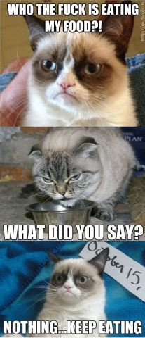 Tard the Angry Cat   Grumpy Cat meets Angry Cat - Cats   Funpic.hu - biggest collection of ...