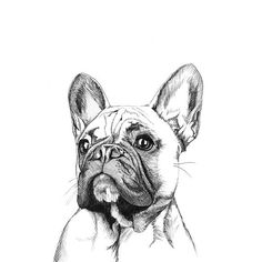 A stunning contemporary print of a fine line illustration of a French Bulldog Buy this beautiful hand drawn illustration for your bulldog loving friends to add a little Frenchie charm to their walls! The use of only black ink on white paper enables a versatility to suit all home decor