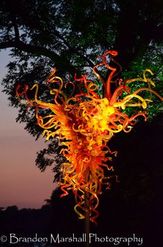 Dale Chihuly at the Dallas Arboretum