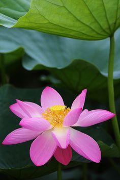 PROTeruhide Tomori on flickr