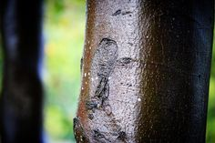 Vestfynsk rasteplads i efterårsfarver #visitfyn #fyn #naturelovers #natur #denmark #danmark #dänemark #landscape #nofilter #sky #assens #mitassens #forrest #fynerfin #lund #skov #vielskernaturen #visitassens #instapic #wood #picoftheday #rasteplads