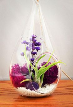 Genuine Purple Amethyst Crystal Quartz in Tear Drop Air Plant Terrarium Kit - AtPerrys.com - 3