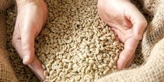 With the right storage, your green coffee will stay fresh for months. Here you can find out what to look out for with your green coffee beans. Best Coffee Roasters, Coffee Roasting, Coffee Beans, Canning, This Or That Questions, Home Canning, Conservation