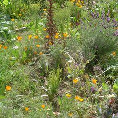 The school garden at Lycée International de Los Angeles. Gorgeous! www.lilaschool.com