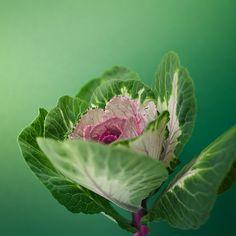 Flower / Nature / Green