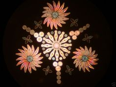 arranged Diatoms- microphotography