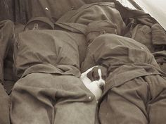 Body warmth! Russian soldiers cuddle up with a puppy and take a snooze during WWII.