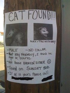 This Makes me laugh!  For real! | Anyone lose a cat? Cat Found? Lost Cat? via Flickr