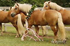 Horses with floral wreaths Fayetteville, Arkansas, Gorgeous Barn Wedding Ceremony, Unique wedding decor, paper flowers @pigmint @jessicakersey @hayleypaigejlm @prattplaceinn @kirstenblowers
