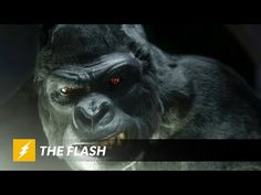 New CW 'The Flash' Trailers Tease Gorilla Grodd, Another 'Arrow' Crossover, And The Rest Of Season 1 : T-Lounge : Tech Times
