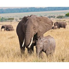 Stewart Parr 'Elephants in Kenya Mother and Baby'