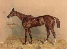 Horse | ... famous steeplechase mare from 1890 Cassell's Book of the Horse