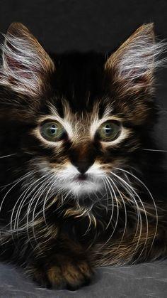 Digital art, adorable kitten, cat, 720x1280 wallpaper