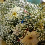 Bridal Bouqet Dreaming Of You, Wedding Flowers, Make It Yourself, Bridal, Plants, How To Make, Bride, Brides, Planters