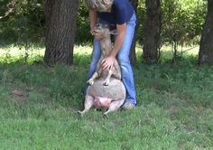 Position the sheep   How to Trim Hooves of Goats and Sheep