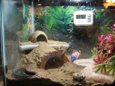 Corner cave area in a crabitat; great use of space.