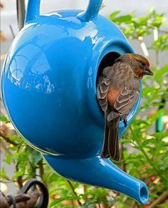 Teapot birdhouse http://www.smartschoolhouse.com/diy-crafts/creative-outdoor-ideas/12