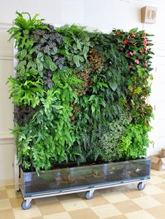 Do you have a blank wall? do you want to decorate it? the best way to that is to create a vertical garden wall inside your home. A vertical garden wall, also called a living wall, is a collection of… Continue Reading → Hydroponic Gardening, Hydroponics, Organic Gardening, Aquaponics Diy, Pallet Gardening, Hydroponic Fish Tank, Vertikal Garden, Vertical Garden Wall, Vertical Planting