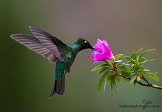 Nature's Beauty Is Everywhere ! by Judylynn Malloch, via 500px