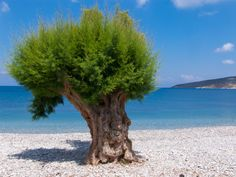 A tree on a beach by Alex Saluk on 500px