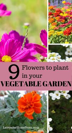 Learn companion planting tips on why these 9 flowers make great companions for many common vegetables. Improve your vegetable garden growth and grow healthier plants. Veg Garden, Vegetable Garden Design, Backyard Vegetable Gardens, Common Garden Plants, Garden Fun, Garden Path, Garden Landscaping, Container Gardening Vegetables, Planting Vegetables