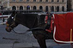 #Winter in #Rome #horse