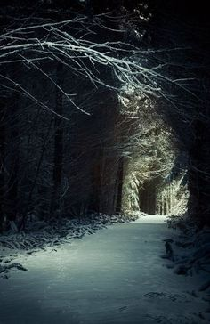 Moonlit Winter Path