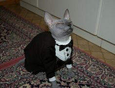 butler cat is at your service