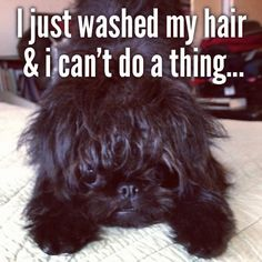 Bindi's Bad Hair Day.... - @lynnec222- #webstagram