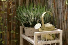 like plant in basin Wrought Iron, Straw Bag, Beautiful Flowers, Plants, Google, Gardens, Balcony, Lawn And Garden, Pretty Flowers