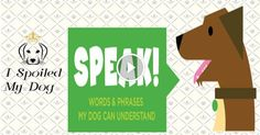 Words & Phrases My Dog Can Understand - Dog Videos