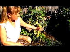 A paradicsom augusztusi biológiai növényvédelme - YouTube Youtube, Youtubers, Youtube Movies