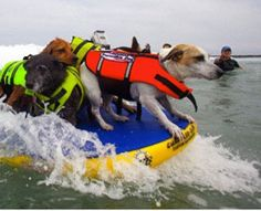 Does man's best friend really enjoy a ride on a surfboard or are they terrified?