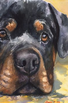 Drawing Animals Rottweiler watercolor Print of the Original Watercolor Painting art cool Rottie Animal Paintings, Animal Drawings, Drawing Animals, Dog Drawings, Rottweiler Puppies, Rottweiler Facts, Beagle, Dog Behavior, Dog Portraits