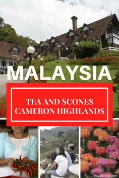 15 things to do in Cameron Highlands. This former British hillstation in Malaysia is a cool spot to drink tea and eat scones. Travel Guides, Travel Tips, Travel Plan, Travel Couple, Family Travel, Cameron Highlands, Country Walk, Backpacking Asia, Tudor Style