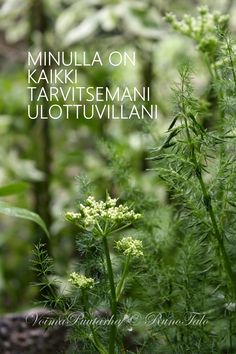 Huhtikuu 2015 Life Organization, Organizing, Affirmation Cards, Spiritual Path, Powerful Words, Note To Self, Positive Vibes, Affirmations, Motivational Quotes