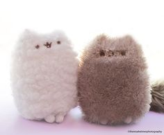 We Love Pusheen (Stormy and Pip) Gato Pusheen, Pusheen Love, Pusheen Plush, Pusheen Stuffed Animal, Pusheen Gifts, Pusheen Stormy, Ty Peluche, Cutest Cats Ever, Mean Cat