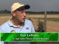 Louisiana's sweet potato crop has had favorable growing conditions, and farmers are hoping for a good harvest. Also two new sweet varieties could give growers options for next year's crop. LSU AgCenter correspondent Tobie Blanchard has this report.