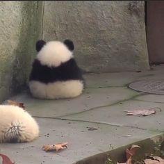 alone, meme e panda immagine su We Heart It Cute Little Animals, Cute Funny Animals, Funny Animal Pictures, Cute Cats, Fluffy Animals, Animals And Pets, Cute Panda, Cute Creatures, Pet Birds
