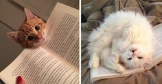 20+ Cats That Need Your Attention The Exact Moment You Start Reading | Bored PandA- this is pretty much my life on a daily basis; it's what I get for having 4 cats.