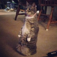 Caught my cat Prairie Dogging. But now I cant find her feet... - Imgur