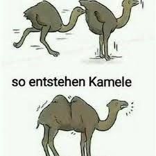Bildergebnis Für Lustig Pervers Lustig Lustig Humor Und Humor